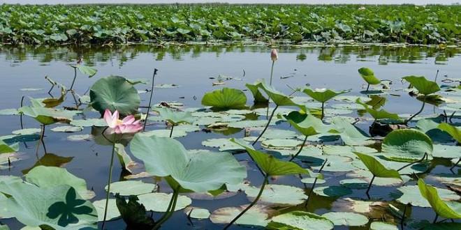 Die Lagune von Bandar-e Anzali